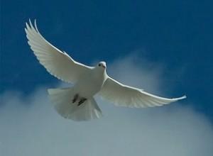 Forgiveness-the-bridge-to-peace